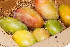 Ripe fresh colorful mango in a box. Ripe fresh sweet colorful mango on a paper Mat in a box royalty free stock photography