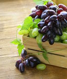 Ripe fresh sweet organic grapes Royalty Free Stock Photos