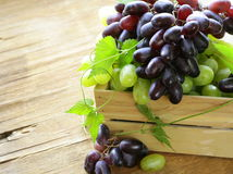 Ripe fresh sweet organic grapes Stock Photography