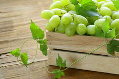 Ripe fresh sweet organic grapes Stock Photo