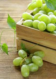Ripe fresh sweet organic grapes Stock Images