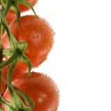Ripe fresh tomatos Royalty Free Stock Photos