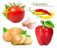Ripe fresh vegetables. Royalty Free Stock Image