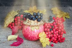Ripe fruits and berries in the fall Stock Images