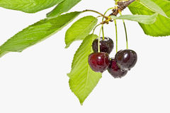 Ripe fruit cherries on a white background close up Stock Images