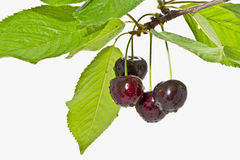 Ripe fruit cherries on a white background close up Royalty Free Stock Photography