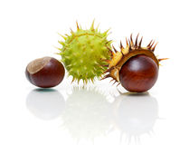 Ripe fruit chestnut closeup on a white background with reflectio Stock Image