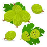 Ripe fruit gooseberry Royalty Free Stock Images