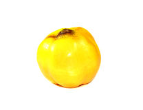 Ripe fruit of a quince Stock Image
