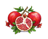 Ripe fruit of red pomegranate on a branch is isolated on a white background. Watercolor illustration of pomegranate and green. Leaves. Hand drawn watercolor stock illustration