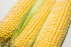 Ripe fruits of corn on over white Stock Images