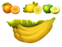 Ripe fruits realistic juicy healthy vector illustration vegetarian diet freshness tropical snack dessert. Ripe yellow banana fruits realistic juicy healthy Stock Images