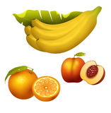Ripe fruits realistic juicy healthy vector illustration vegetarian diet freshness tropical snack dessert. Ripe yellow banana fruits realistic juicy healthy Royalty Free Stock Images
