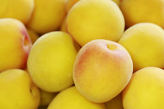 Ripe fruits of Ume Royalty Free Stock Images