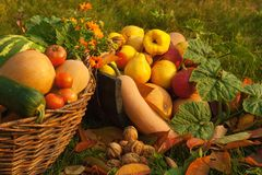 Harvest in the autumn garden royalty free stock photo