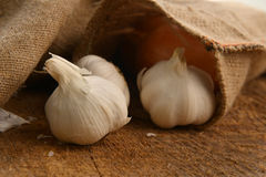 Ripe garlic Stock Photos