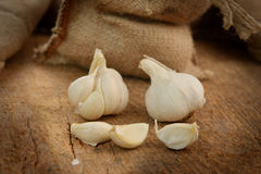 Ripe garlic Stock Photography