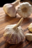 Ripe garlic bulb Royalty Free Stock Photography