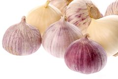 Ripe garlic bulbs Stock Images