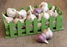Ripe garlic in green box Stock Photography