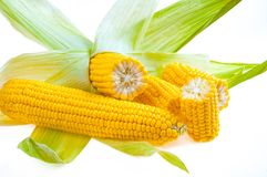 Free Ripe Golden Corn Isolated On White Background Royalty Free Stock Images - 140657899