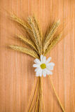 Ripe golden ear wheat with chamomile on wooden background Royalty Free Stock Photo