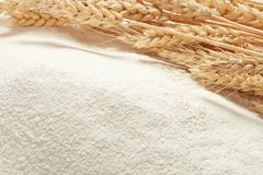 Ears of wheat on heap of flour. Ripe golden ears of wheat on heap of white wheat flour stock photo