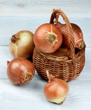 Ripe Golden Onions Royalty Free Stock Image
