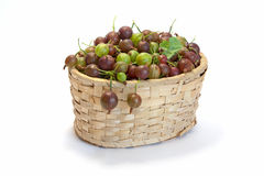 Ripe gooseberries in basket on white. Ripe gooseberries in wicker basket  on white background Stock Photos
