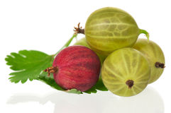 Ripe gooseberry Stock Images