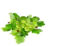 Ripe gooseberry with leaf on white. Royalty Free Stock Photos