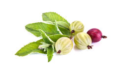 Ripe gooseberry and leaves of mint Royalty Free Stock Images