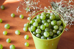 Ripe gooseberry on a table Stock Images