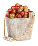Ripe gooseberry in wooden bucket. On white background Stock Photography