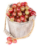 Ripe gooseberry in wooden bucket. On white background Royalty Free Stock Image