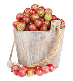 Ripe gooseberry in wooden bucket. On white background Royalty Free Stock Photography