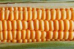 Ripe grains of golden corn closeup, harvest season, healthy organic nutrition of the ear of corn. Vegetarian food golden textural. Wallpaper, abstract stock image
