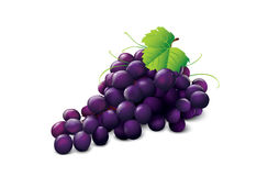 Ripe grape. Ripe blue grape on the white background Royalty Free Stock Images