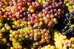 Ripe grape in bucket. Detail Stock Photos