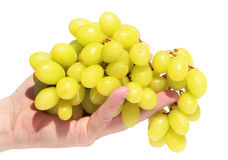 Ripe grape cluster Royalty Free Stock Photos