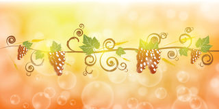 Ripe grape fruit and corn illustration Royalty Free Stock Photos
