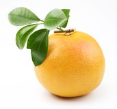 Ripe grapefruit Stock Photos