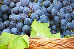 Ripe grapes Royalty Free Stock Photos