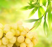 Ripe grapes Royalty Free Stock Photography