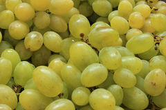 Ripe grapes background Stock Photography