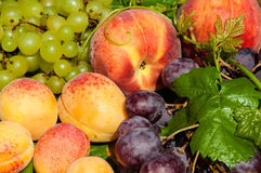 Ripe grapes and fruits Royalty Free Stock Photo