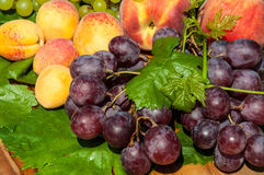 Ripe grapes and fruits Stock Photo