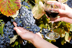 Ripe grapes and glass of wine in people's hands Stock Photography