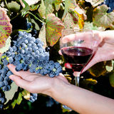 Ripe grapes and glass of wine in people's hands Stock Images