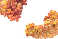 Ripe grapes isolated. Ripe yellow-violet grapes isolated on white royalty free stock photo